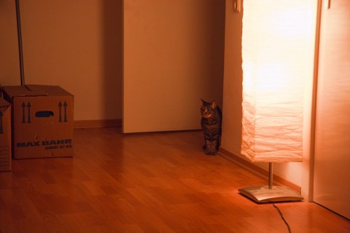 Katze steht im Türrahmen
